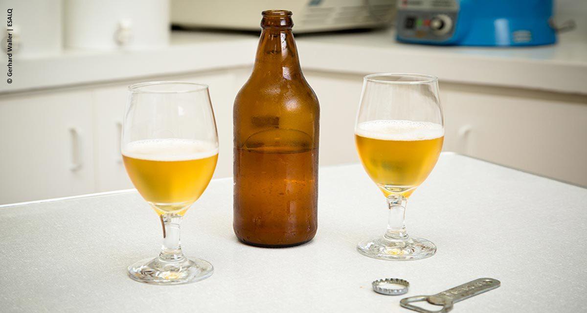 Leveduras brasileiras resultam em cerveja especial de alta qualidade
