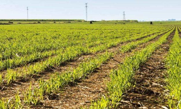 Atvos adota diversas medidas no plantio e obtém redução no consumo de mudas