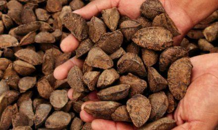Corante extraído de sementes brasileiras garante sustentabilidade ao tingimento de tecidos
