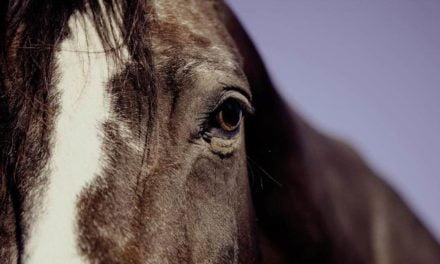 Temporada de vacinação em equinos