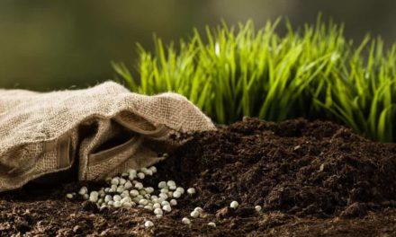 Os fertilizantes colaboram com  o ciclo do carbono na natureza, essencial à vida do ser humano
