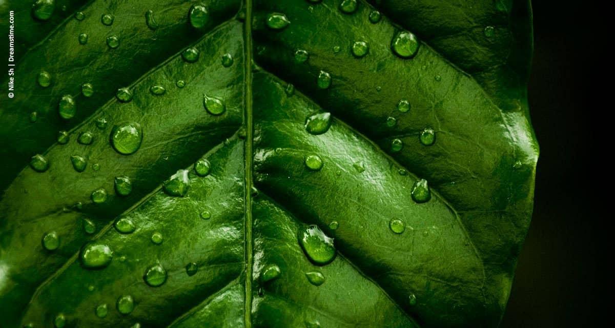 Irrigação é arma poderosa no aumento da produtividade agrícola brasileira