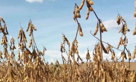 Produtores de soja aumentam a colheita em até 18% com uso de algas marinhas