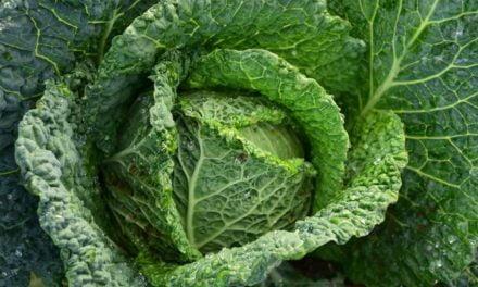 Nutrientes essenciais que vêm das plantas