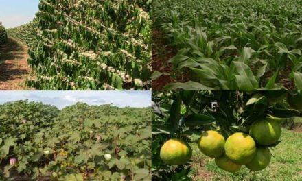 Princípios fundamentais para o uso eficiente de nutrientes