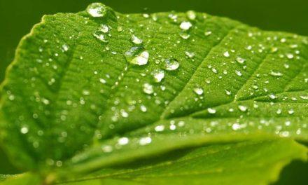 Yara inaugura primeira fábrica de fertilizantes foliares no Brasil