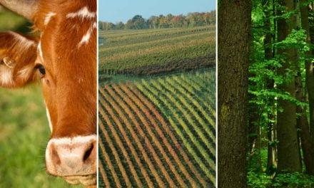 Tecnologia integrando lavoura, pecuária e floresta