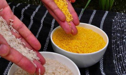 Espera pelo arroz dourado pode estar perto do fim