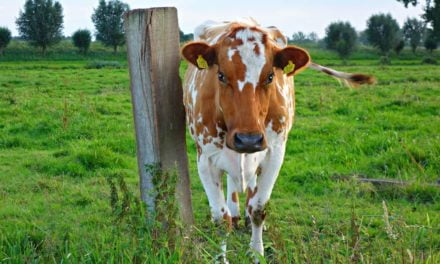 NovaProm abre mercado americano para novo ingrediente funcional bovino