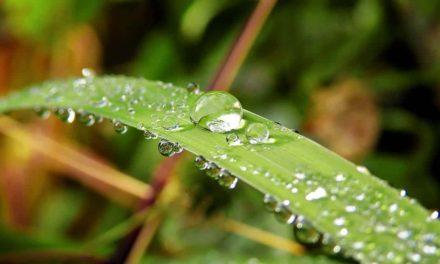 Retorno das chuvas em maio é boa notícia para o triticultor