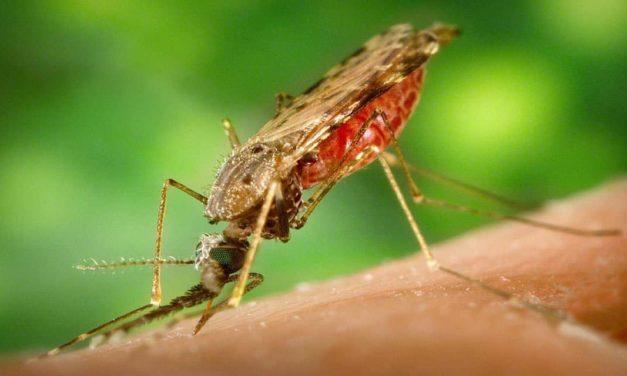 Syngenta anuncia a fase inicial de desenvolvimento de um novo inseticida para combater a malária