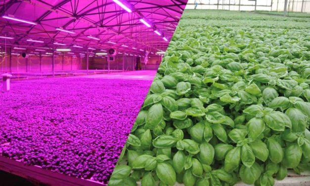 Tecnologia em LED para horticultura