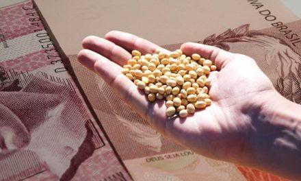 A importância do seguro agrícola na lavoura