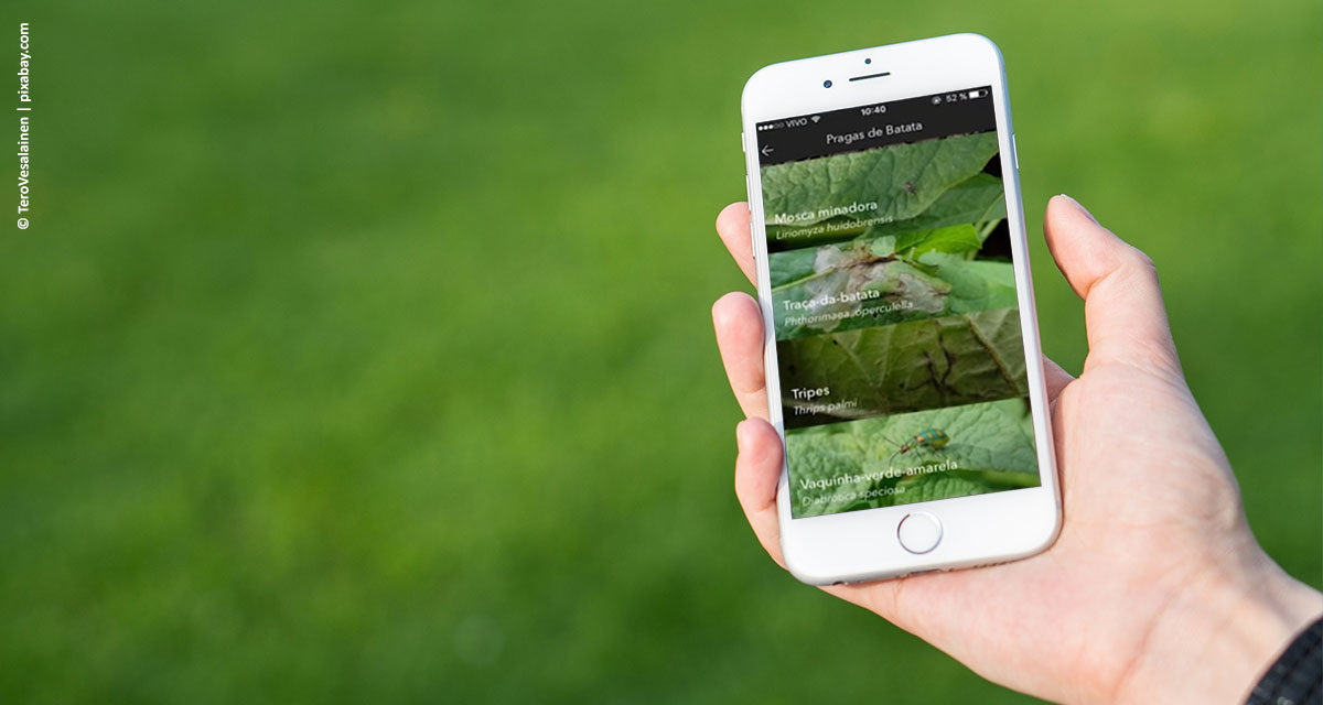 Aplicativo Adama HF ganha versão atualizada para auxiliar produção no setor de hortifrúti