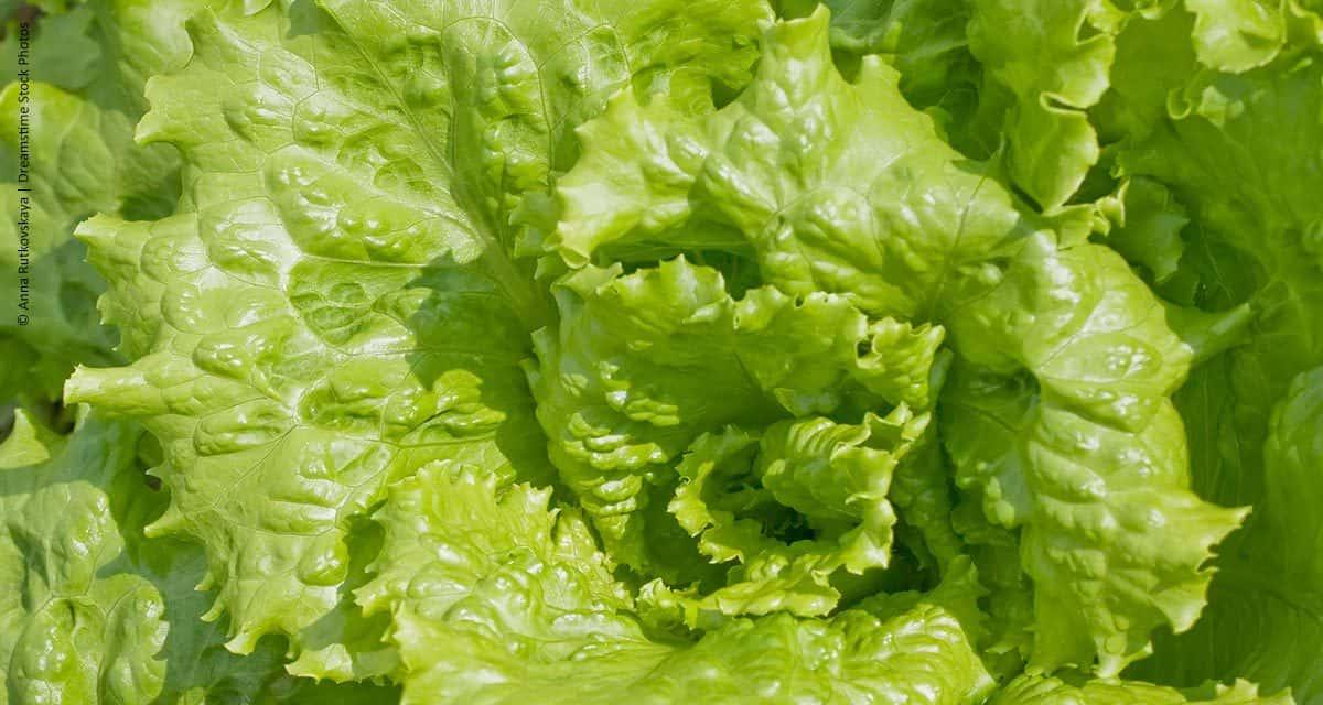 Clima prejudica produção de hortaliças na região de Curitiba, PR