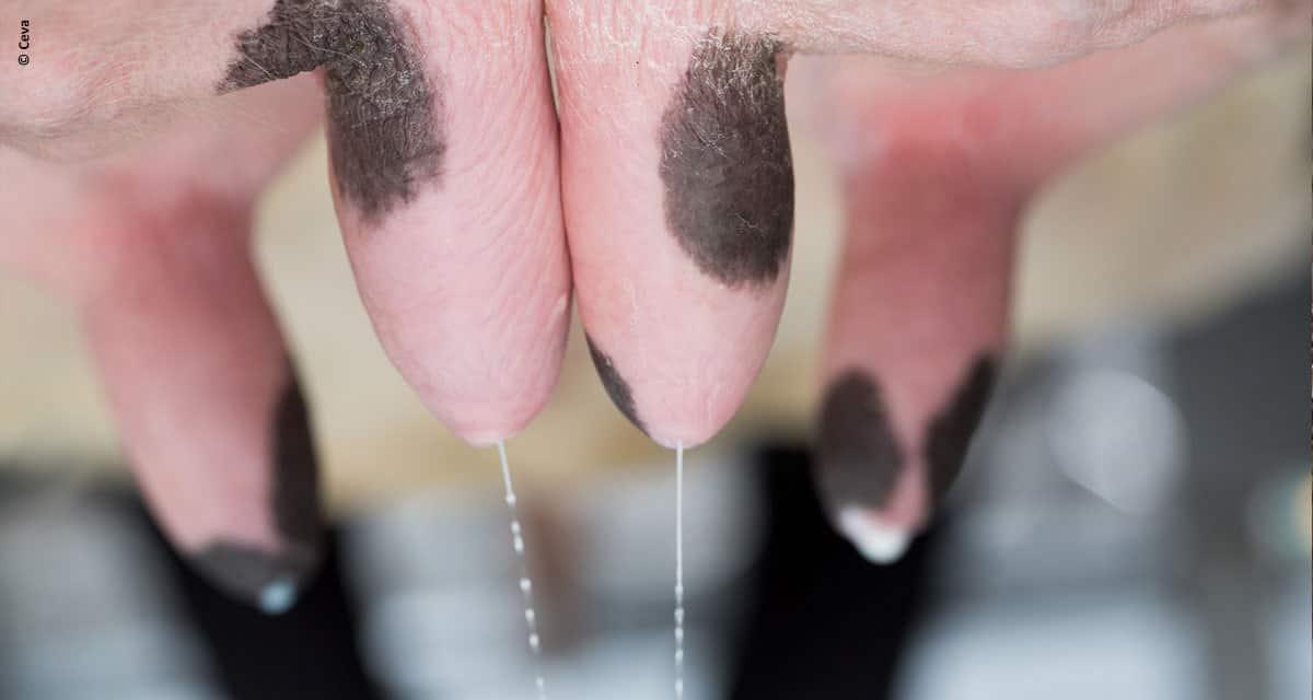 O vazamento de leite e suas possíveis causas *