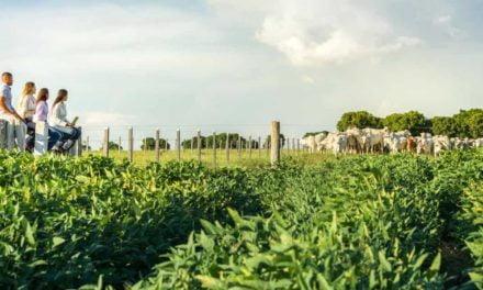 Investimento milionário na produção sustentável