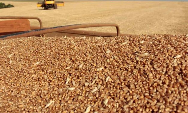 BASF e Biotrigo firmam parceria para desenvolvimento de nova tecnologia na cultura do trigo