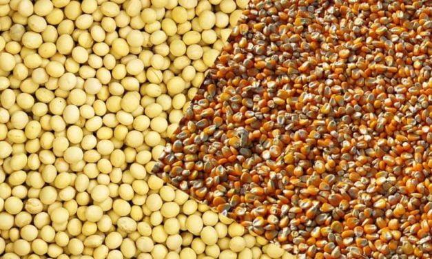 Uso de fertilizante biotecnológico amplia a colheita de soja e milho em 14 sacas por hectare