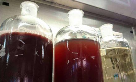 Cientistas desenvolvem produtos com resíduos da indústria vinícola