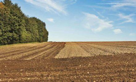 Plantio do trigo chega a 87% da área do Paraná