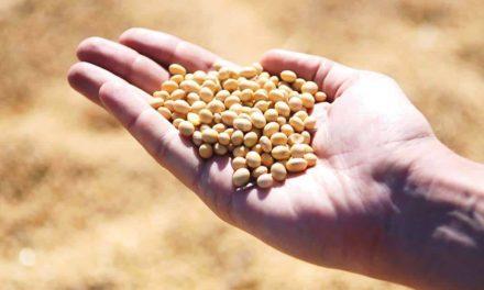 Oceana Brasil lança produto para tratamento de sementes em culturas de grãos