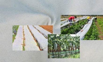 Uso de Nãotecidos no agronegócio reduz aplicação de agrotóxicos