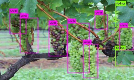 Cientistas vão treinar robôs para identificação automática de plantas