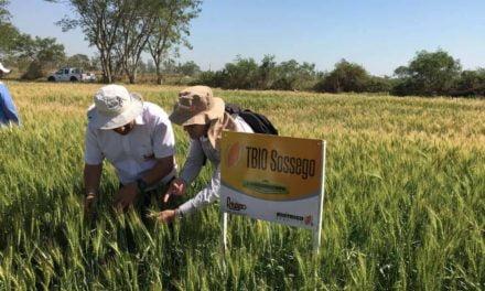 Pesquisa brasileira ganha destaque na Bolívia