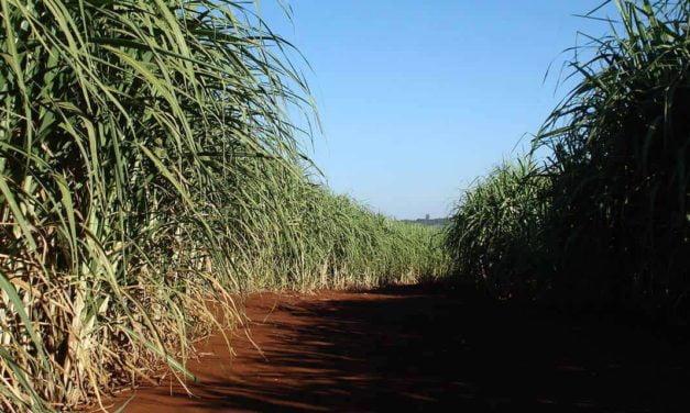 Tecnologias IHARA para a cana-de-açúcar estão na FERSUCRO 2018