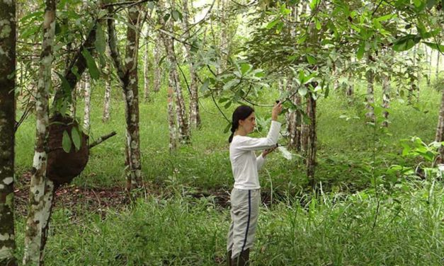 Biodiversidade otimiza processos ecológicos