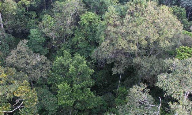Conservação na Amazônia focada somente em carbono pode desproteger a biodiversidade