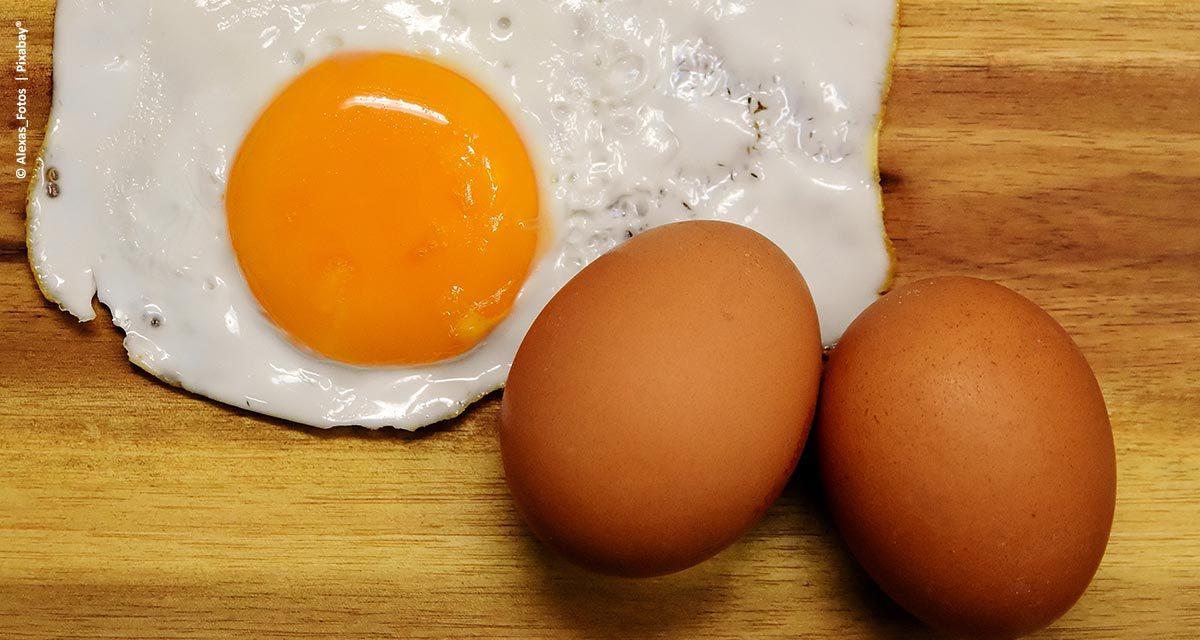 Ovos: mais produtividade, valor nutricional e validade