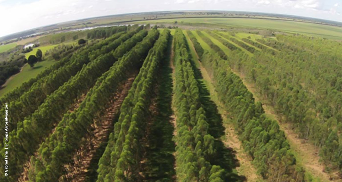 ILPF reduz riscos de mercado para produtores