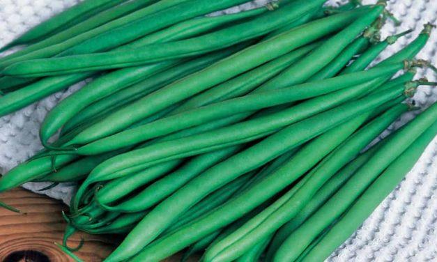 Desenvolvimento de produtos para o Cinturão Verde busca diversidade e produtividade