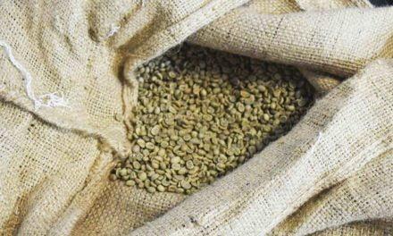Exportações de café brasileiro crescem 24,2% em julho