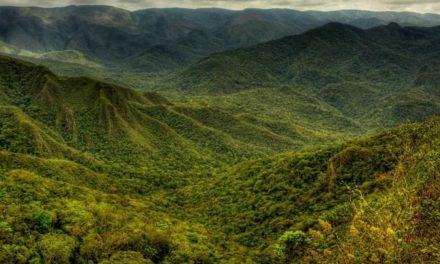 Encontro reúne investidores nacionais e internacionais e empreendedores do setor florestal e agroflorestal
