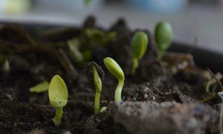Mosaic lança novo fertilizante Aspire®