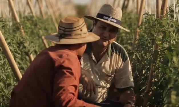 Syngenta busca uma visão compartilhada para a agricultura sustentável