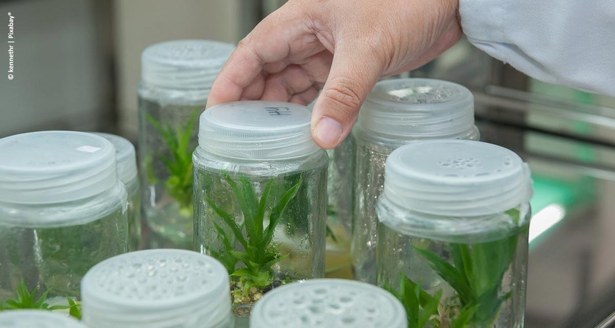 Os insumos biológicos na agricultura do futuro