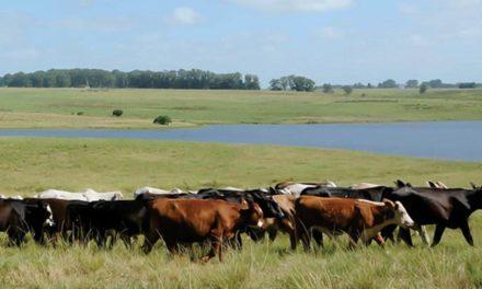 Animais criados livres no Pampa fornecem carne mais saudável
