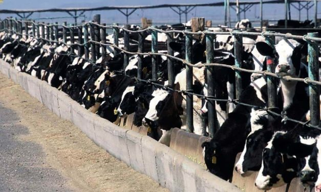 Mosaic Fertilizantes lança produto para nutrição animal