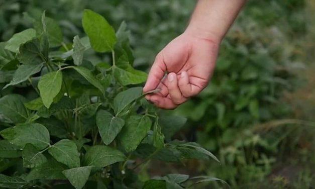 Fertilizantes que aumentam produtividade e melhoram qualidade do solo