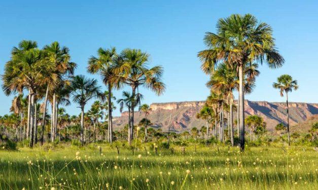 MATOPIBA: cartilha orienta sobre regularização ambiental de propriedades rurais