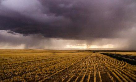 El Niño altera dinâmica de pragas e doenças  e exige atenção de agricultores