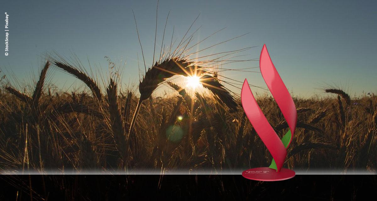 Santander e Esalq/USP revelam vencedores do Prêmio Novo Agro