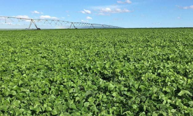 Mitos e verdades sobre os fertilizantes biotecnológicos