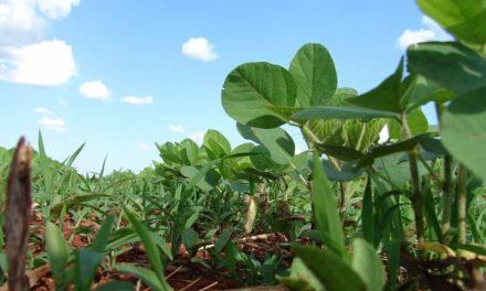 ABIOVE apresenta desenvolvimento da produção sustentável de soja brasileira na Europa