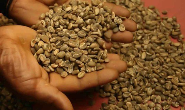 Brasil bate recorde mensal e exporta 3,74 milhões de sacas de café em outubro