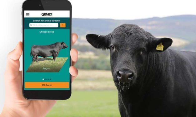 Central lança primeiro aplicativo para raças de corte